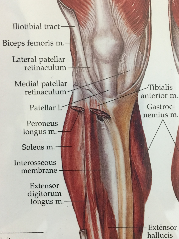 Chiropractic Health-Front Knee Area-kerinver-Kissimmee-Lake Nona ...